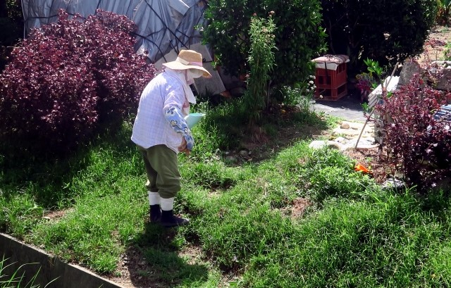 認知症おばあちゃんの庭